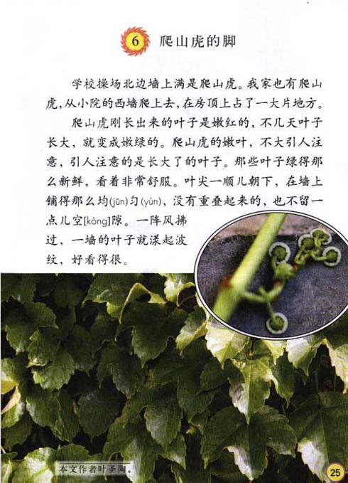 级上的《爬山虎的脚_第4页_乐乐简笔画